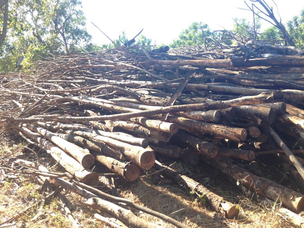 Mahogany feedstock